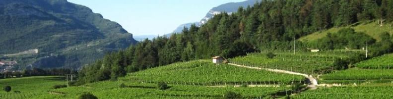 Vini di territorio - Roccabruna
