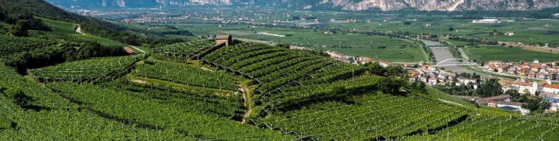 Letture: le ere del vino di Angelo Valentini - Roccabruna
