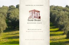 Ercole olivario: XXIX edizione - Roccabruna